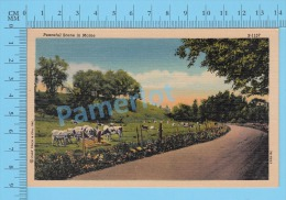 CPSM, Maine ( Peaceful Scene In Maine) Linen Postcard Recto/Verso - Etats-Unis