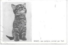 CHAT - Ernest, Sans Pedigree, Portrait Par YLLA - Katten