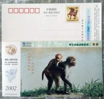 Monkey - Singes