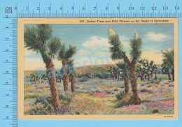 CPSM, Trees  (Joshua Trees And Wild Flowers On The Desert In Springtime ) Linen Postcard Recto/Verso - Fleurs, Plantes & Arbres