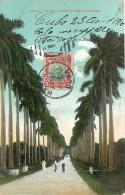 Réf : A-15-2868 :   CUBA   ROYAL PALMS - Cuba