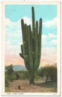 Giant Cactus - El Paso