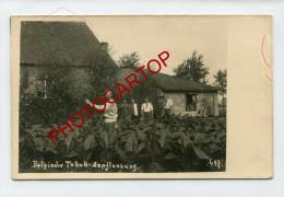 Culture Du TABAC En BELGIQUE-Soldats Allemands-Non Situee-Carte Photo Allemande-Guerre-14-18-1WK-BELGIEN- - Belgique