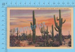 CPSM, Sahuaro ( Sentinels Of The Desert Giant Cactus  ) Linen Postcard Recto/Verso - Fleurs, Plantes & Arbres