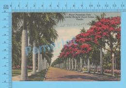 CPSM, Florida ( 1948, Royal Poinciana Tree Admidst Majestic Royal Palms) Linen Postcard Recto/Verso - Fleurs, Plantes & Arbres