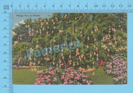 CPSM, Florida ( Mango Tree In Florida ) Linen Postcard Recto/Verso - Fleurs, Plantes & Arbres