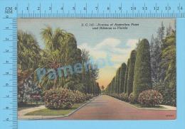 CPSM, Florida ( Avenue Of Australian Pines And Hibiscus In Florida ) Linen Postcard Recto/Verso - Fleurs, Plantes & Arbres