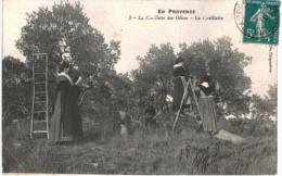 METIER ... EN PROVENCE ... LA CUEILLETTE DES OLIVES - Professions