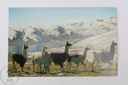 Postcard Bolivia - Cordillera De Los Andes/ Andes Chain Of Mountains/ Proximate To Chacaltaya - Bolivia