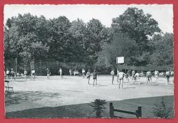 Morlanwelz - Lycée Warocqué - La Plaine De Jeux- Les Sports -1954 ( Voir Verso ) - Morlanwelz