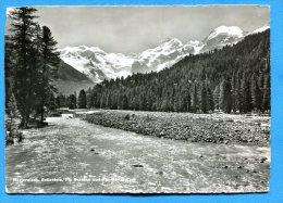 AVR81, Morteratsch, Bellavista, Piz Bernina, 4290, GF,non Circulée - GR Grisons