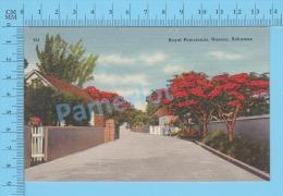 CPSM, Bahamas ( Royal Poincianas At Nassau ) Linen Postcard Recto/Verso - Fleurs, Plantes & Arbres