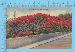 CPSM, Bahamas ( Royal Poincianas , Cover Hamilton Bermuda 1950 No Stamp ) Linen Postcard Recto/Verso - Fleurs, Plantes & Arbres