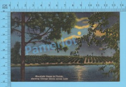 CPSM, Florida ( Moonlight Scene Showing Orange Grove Acros Lake,) Linen Postcard Recto/Verso - Cultures