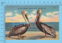 CPSM, Florida ( Ma And Pa Pelican Wich Is Wich, See Other Side.  ) Linen Postcard Recto/Verso - Animaux & Faune