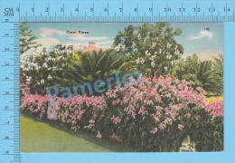 CPSM, Florida ( Coral Vines ) Linen Postcard Recto/Verso - Fleurs, Plantes & Arbres