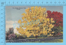 CPSM, Florida ( The Golden Shower Tree, ) Linen Postcard Recto/Verso - Fleurs, Plantes & Arbres