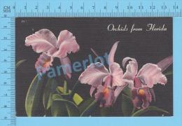 CPSM, Florida (Orchids From Florida) Linen Postcard Recto/Verso - Fleurs, Plantes & Arbres