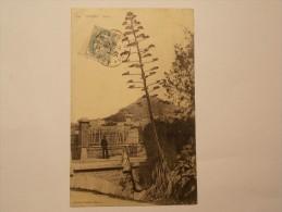 Carte Postale - HYERES (83) - Aloés (1848) - Hyeres
