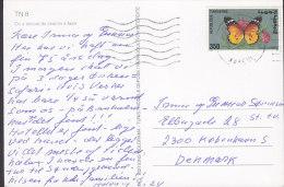 Tunisia CPA On A Encore Du Chemin á Faire Dromedar 1975? To Denmark Schmetterling Butterfly Papillon - Tunisia (1956-...)