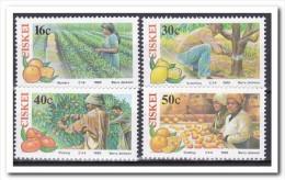 Ciskei 1988, Postfris MNH, Citrus Fruits - Ciskei