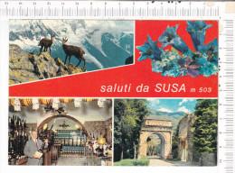 SALUTI   Da   SUSA    M.   503   -   4   Vues    -  Citta  Del  Cordial    SUSA - Andere Steden