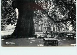 TRSTENO - Platan, Ospeg Debla. - Croatie