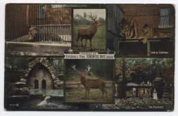 CANADA ~ Animals At Riverdale Park TORONTO Ontario C1910 Multi View Postcard - Toronto
