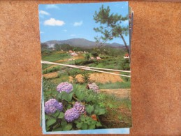 MADERE  LOT DE  62 CARTES MODERNES DE L ILE - Postcards