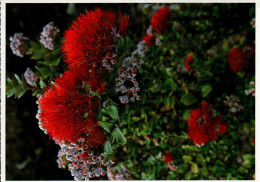 Hawaii VolcanoesNational Park Postcard, Sacred Flower - USA National Parks