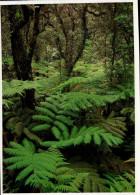 Hawaii VolcanoesNational Park Postcard, Rain Forest Trees - USA National Parks