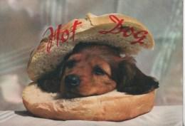 HOT DOG - Hunde