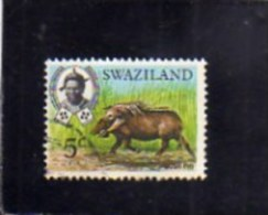 SWAZILAND 1969 FAUNA ANIMALS Bush Pig. WILDLIFE WILD ANIMAL 5c  CENT. 5 FACOCERO ANIMALE SELVATICO USED - Swaziland (1968-...)