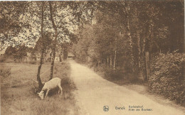 Limbourg - Genck - Genk - Berkendreff - Allée Des Bouleaux - Photo: Bogeman - Ed: Maison Stulens - Circulé: 1902 - Genk