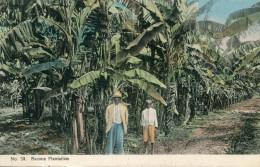 JAMAIQUE(TYPE) BANANE - Jamaïque