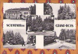 1 Cpa Souvenir Du Grand Bois - France