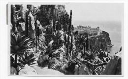 (RECTO / VERSO) MONACO EN 1933 - N° 36 - LES JARDINS EXOTIQUES - TIMBRE ET CACHET - Exotischer Garten