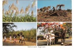Mauritius - Ile Maurice - Canne A Sucre - Sugar Cane - Mauritius