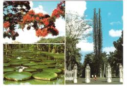 Mauritius - Ile Maurice - Jardin Botanique De Pamplemousses - Mauritius