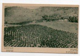 Brazil Sao Paulo Coffe Plantation Cartao Postal Vintage Original Postcard Cpa Ak (W4_778) - São Paulo