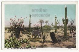 SPRINGTIME ON ARIZONA DESERT ~ PLANTS - CACTUS ~ 1920s Vintage Postcard [5791] - Unclassified