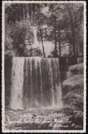 Australien  - Tasmania - Mt Field National Park - Russell Falls - Nice Stamp - Wilderness