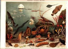 1894 SEA AQUARIUM OCTOPUS SQUID LOBSTER JELLYFISH Antique Chromolithograph Print - Old Paper