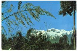 ECUADOR-MT.CARIHUAIRAZO / THEMATIC STAMPS-BUTTERFLY - Ecuador