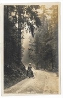 LES VOSGES (G.HUSS- ST DIE) - Saint Die