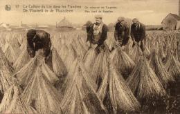 AGRICULTURE - CULTURE - La Culture Du Lin Dans Les Flandres - De Vlasteelt In De Vlaanderen - On Retourne Les Carpettes. - Cultures
