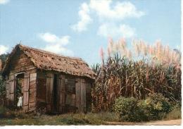 Paysage Tropical (n°27 Coco Cabana) Case - Canneà Sucre- Fillette - Guadeloupe