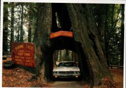 Avenue Of The Giants, Humboldt Redwoods State Park, Original Drive-Thru Tree, Historic Shrine Tree - USA National Parks