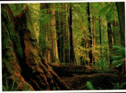Avenue Of The Giants, Humboldt Redwoods State Park, Coast Redwoods - USA National Parks