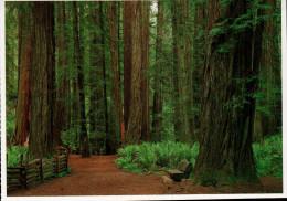 Coast Redwoods, National And State Parks, Redwood - USA National Parks